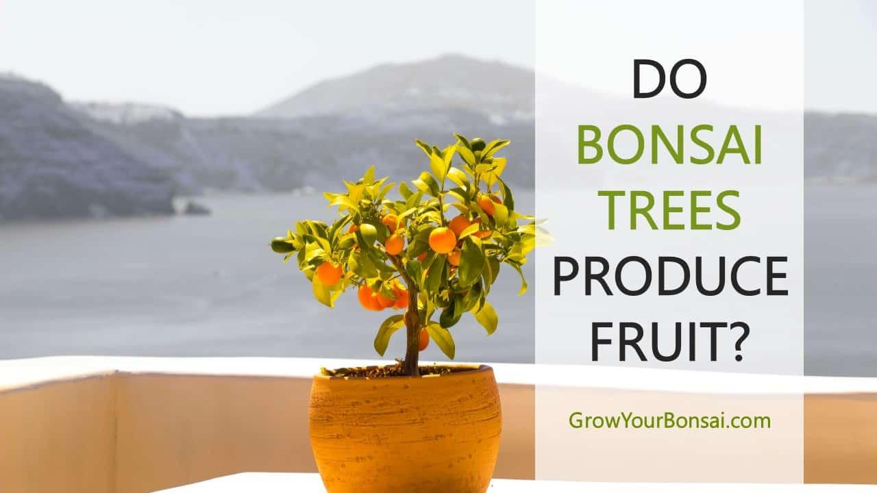 Do Bonsai Trees Produce Fruit