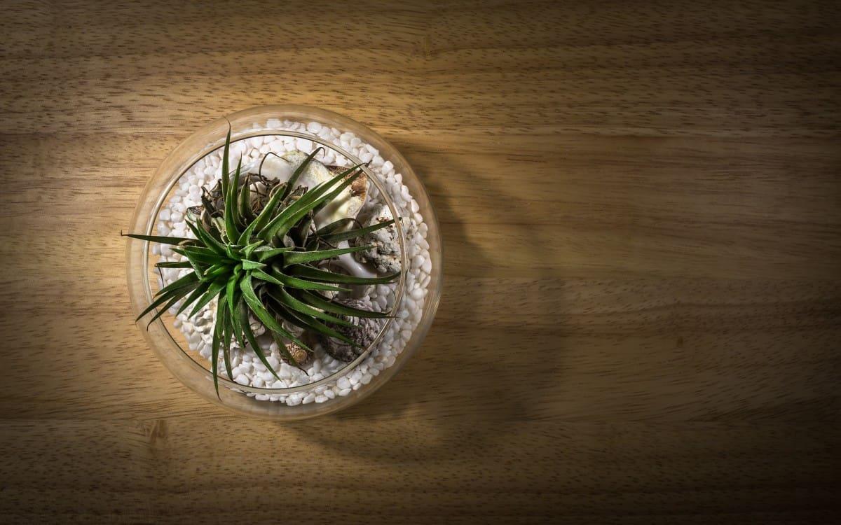 Can A Bonsai Tree Live In A Terrarium