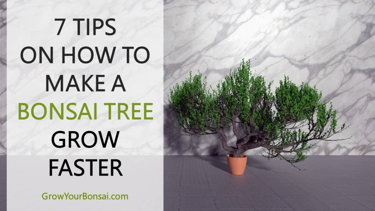 7 Tips on How To Make A Bonsai Tree Grow Faster