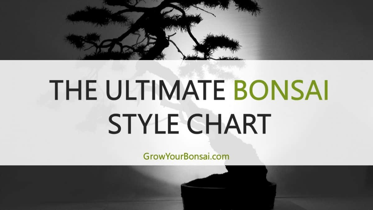 The Ultimate Bonsai Style Chart With Pictures Details Grow Your Bonsai